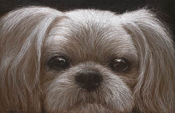 Young wook Han_Dog_60x91cm_Oil on aluminum, scratch_2009