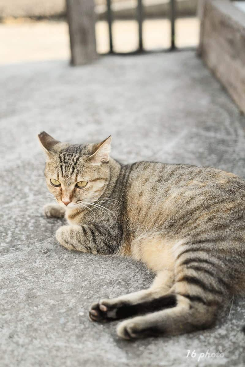 A-Tainan-cat-village-24