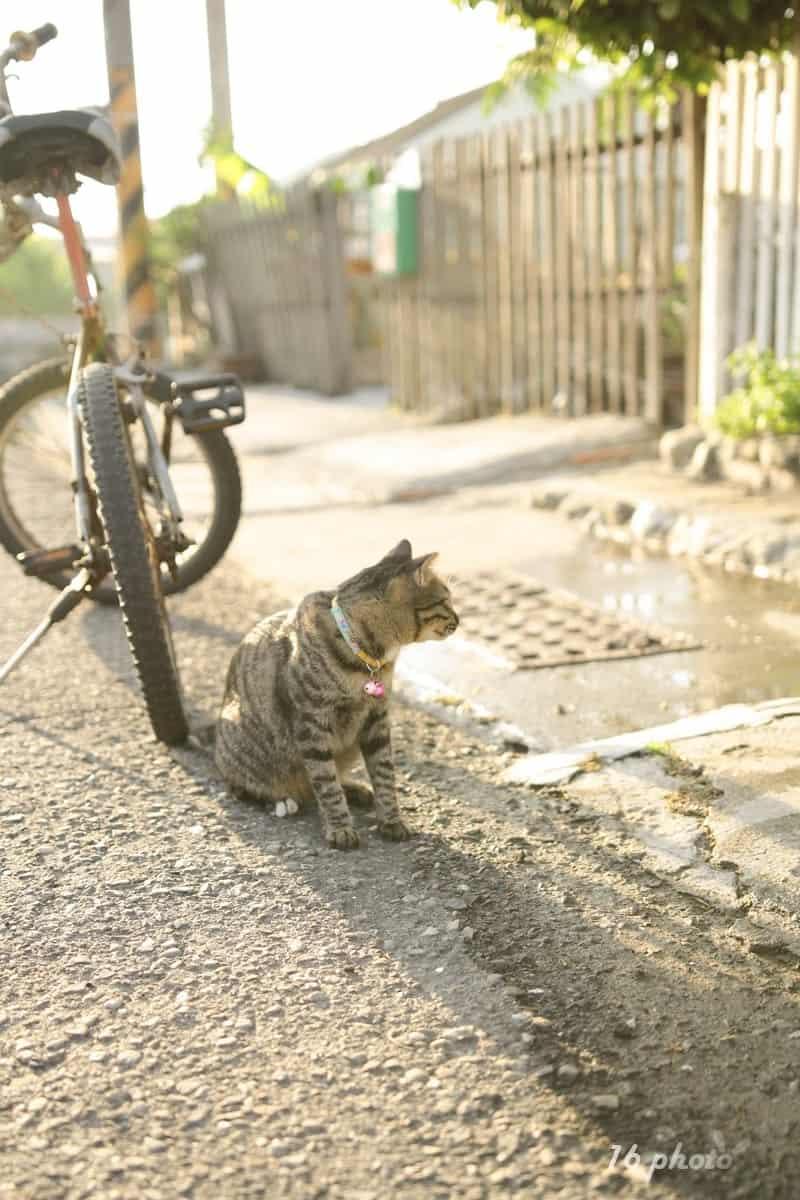 A-Tainan-cat-village-28