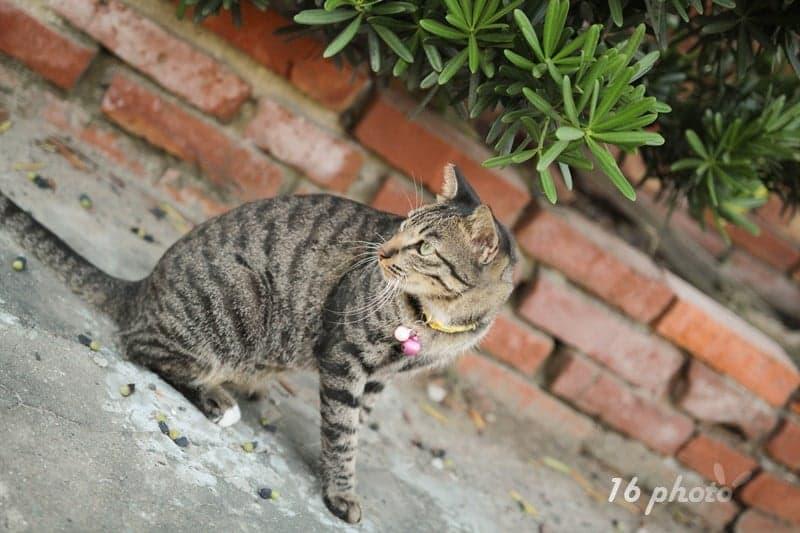 A-Tainan-cat-village-30