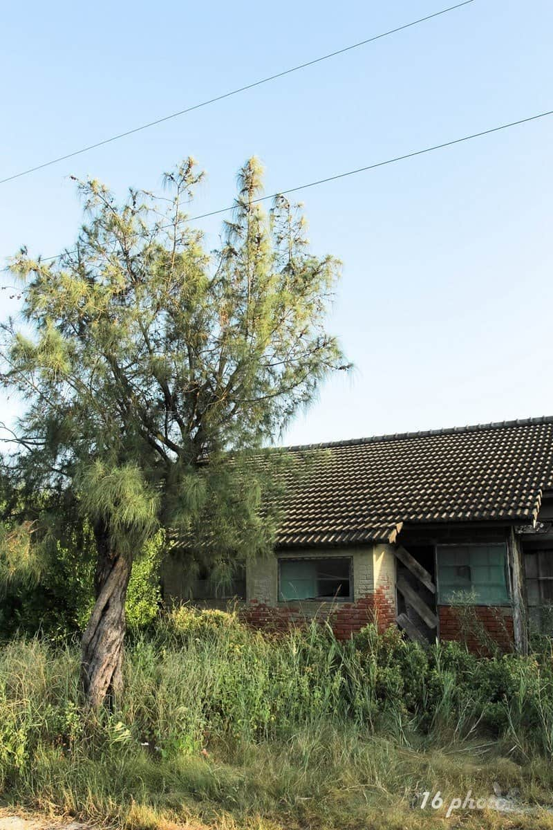 A-Tainan-cat-village-33