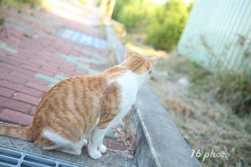A-Tainan-cat-village-5