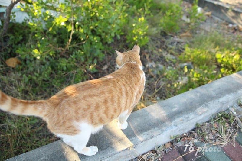 A-Tainan-cat-village-6