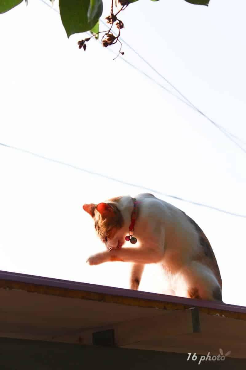 C-Tainan-cat-village-1