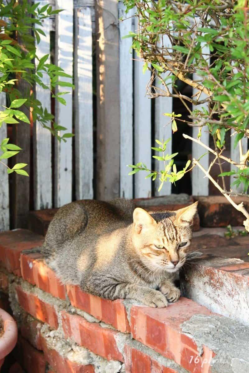 C-Tainan-cat-village-3