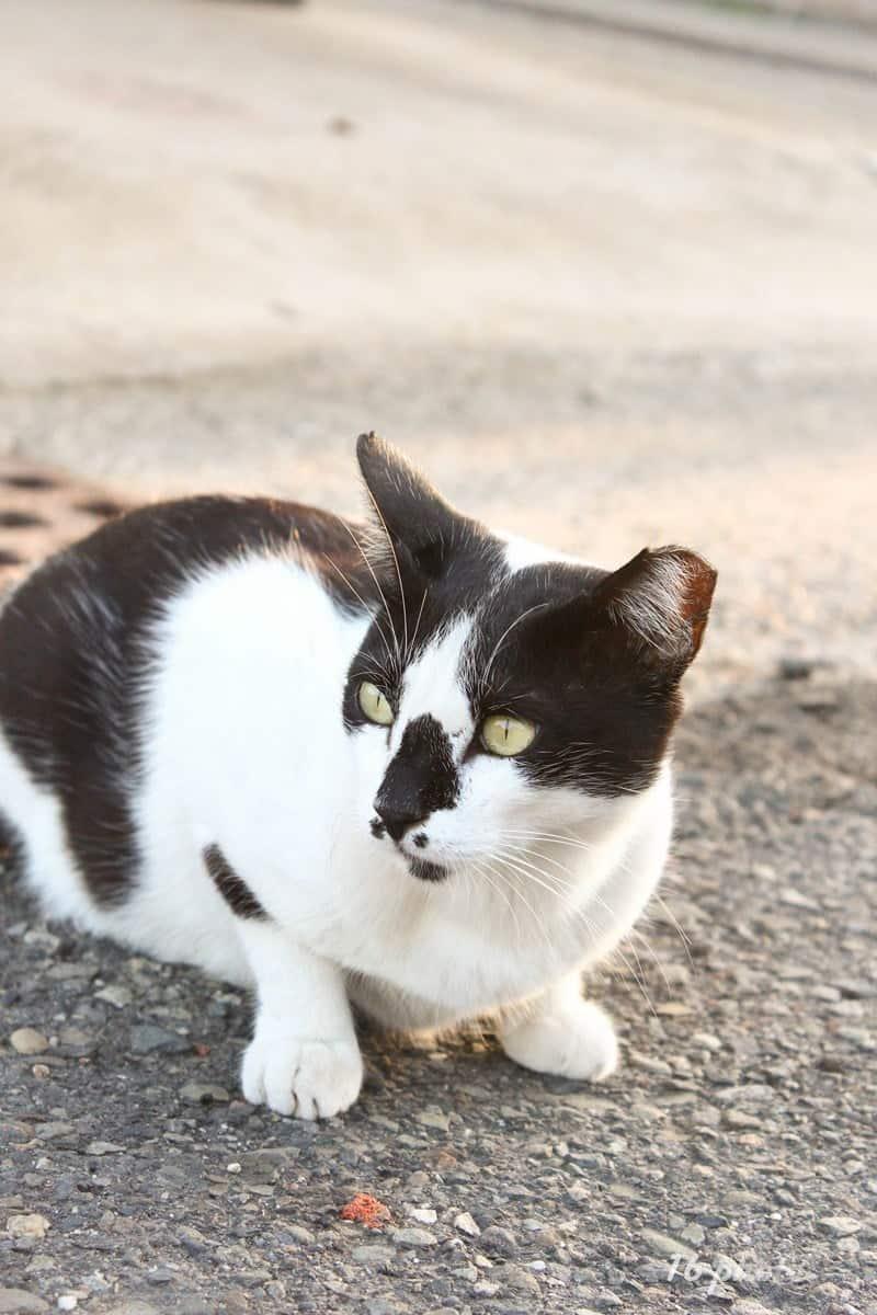 C-Tainan-cat-village-5