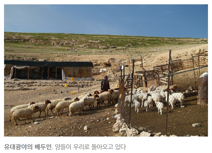 shepherd_field2