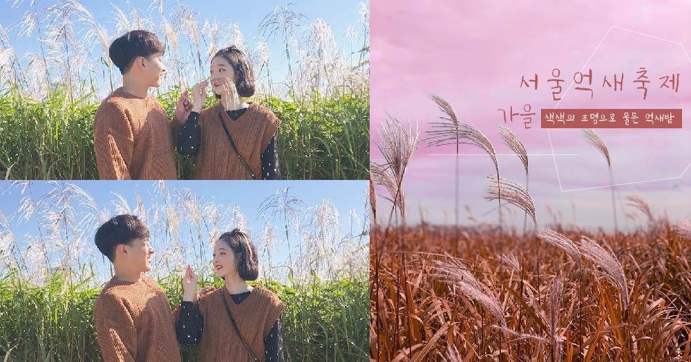 【오늘은여기】  서울, 가볼 만한 곳 가을의 정취를 느낄 수 있는 '상암 하늘공원 억새축제' 10/12~18일까지.