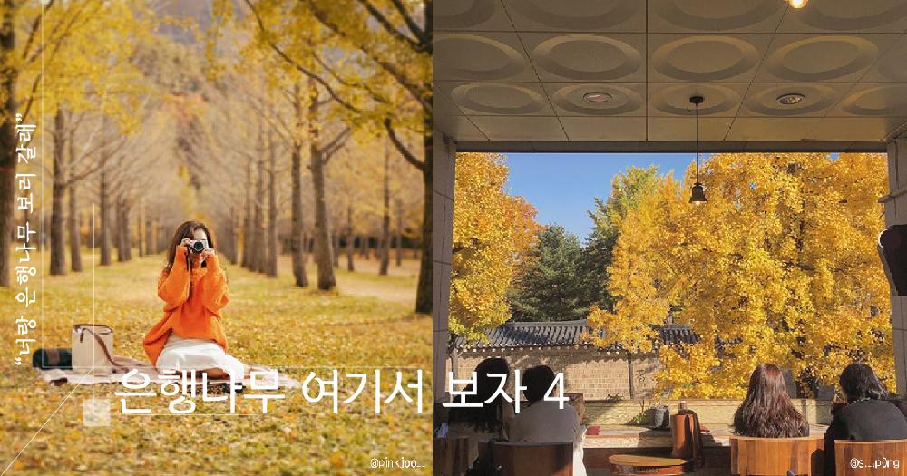【오늘은여기】 이번 주말 아니면 못 보는 노랑이들, 나 너랑 은행나무 구경 갈래!ヽ(•̀ω•́ )ゝ✧ 은행나무 핫플레이스 4