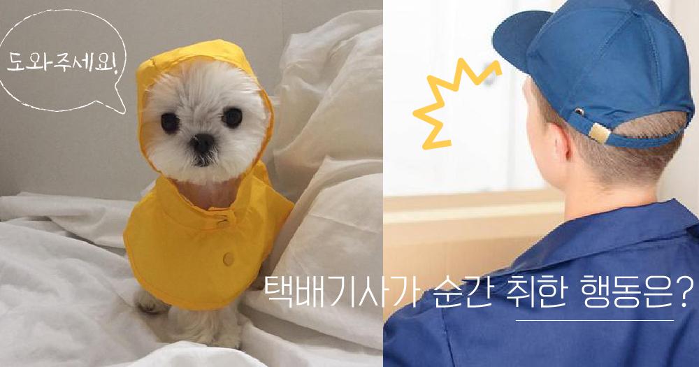 【시시콜콜】 멋진 택배기사가 위험한 강아지를 봤을 때 일어나는 일!
