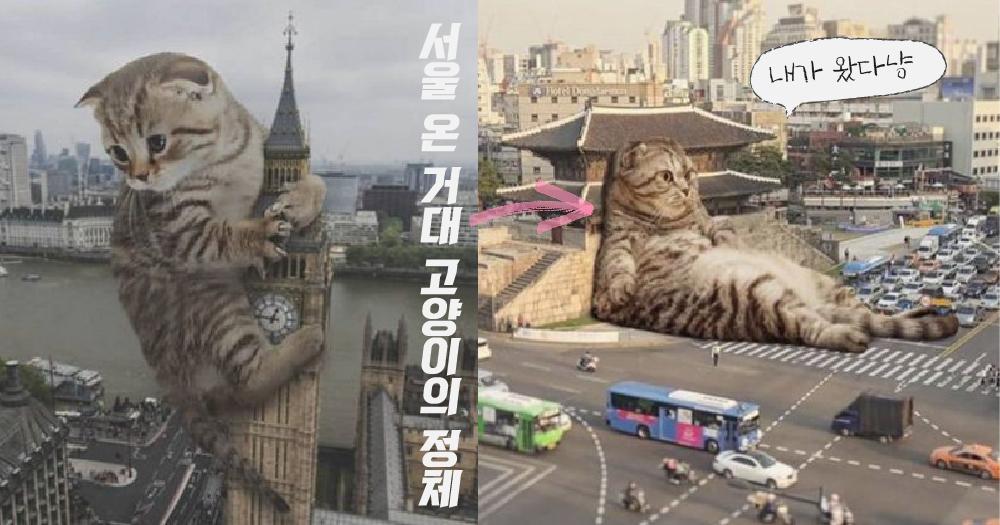 【시시콜콜】 이 고양이가 서울에? 세계를 돌아다니는 거대 고양이의 정체!