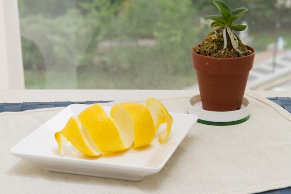모기가 싫어하는 허브나 과일을 창틀에 두면 끝! 친환경 모기 퇴치