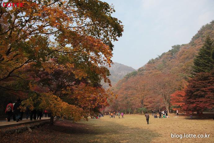절정의 빛깔로 물드는 가을, 롯데JTB와 떠나는 가을여행