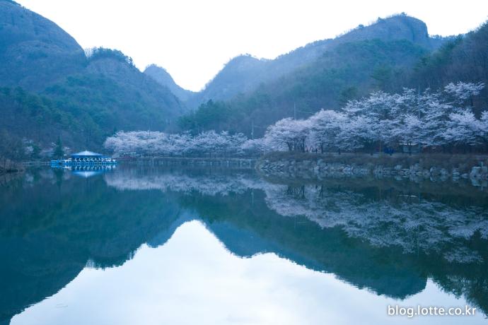 진안 마이산 벚꽃 터널