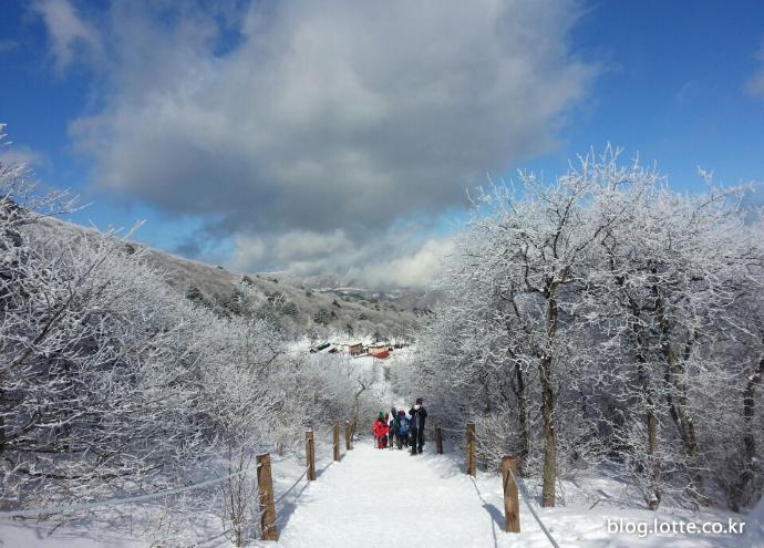 눈꽃 만발 '태백산 눈축제'