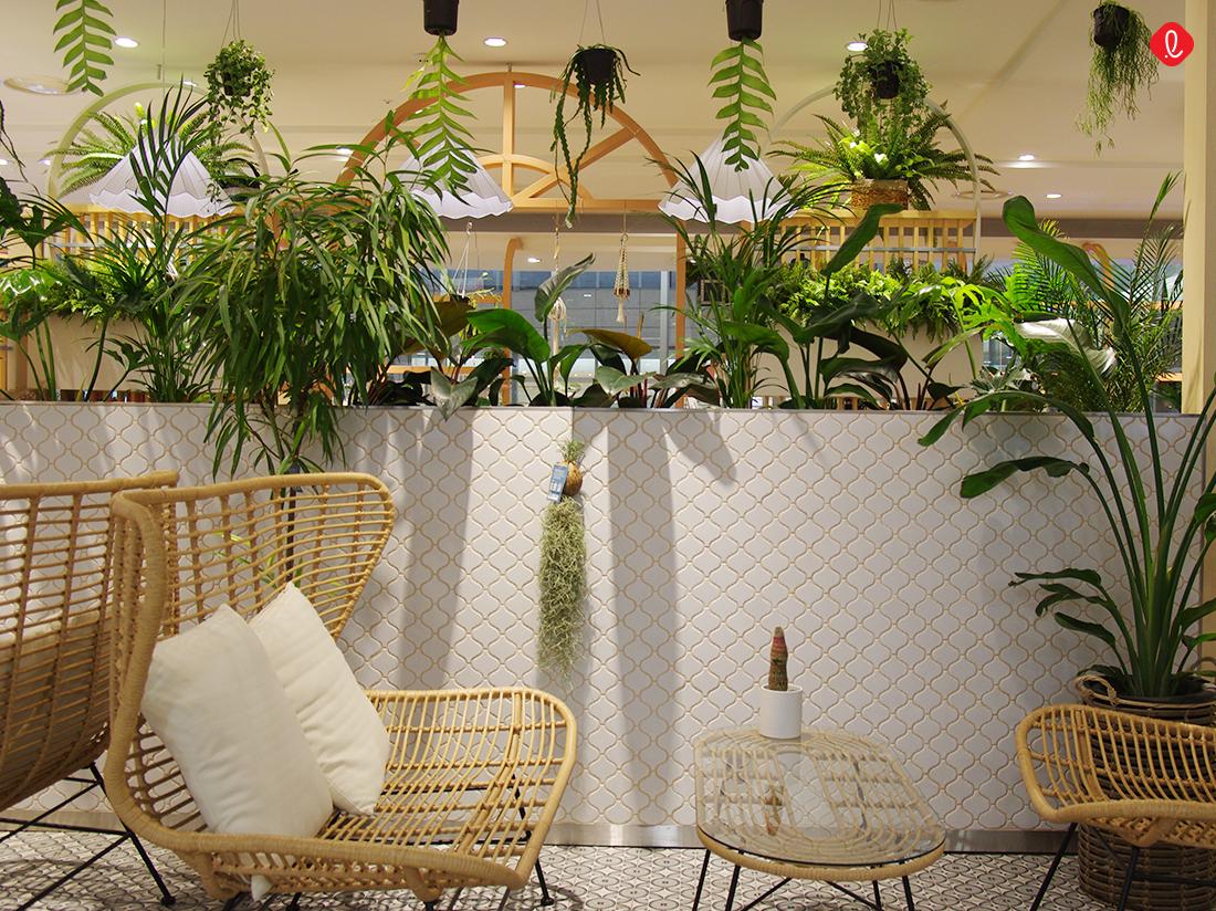 라탄의자, 정원 카페, 식물 카페, 분당 롯데백화점, 백화점 카페