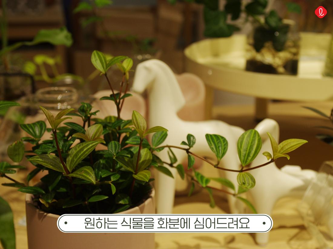공기정화식물, 실내공기정화식물, 공기정화식물종류, 개업축하화분, 개업화분, 신혼집 인테리어, 신혼집들이선물