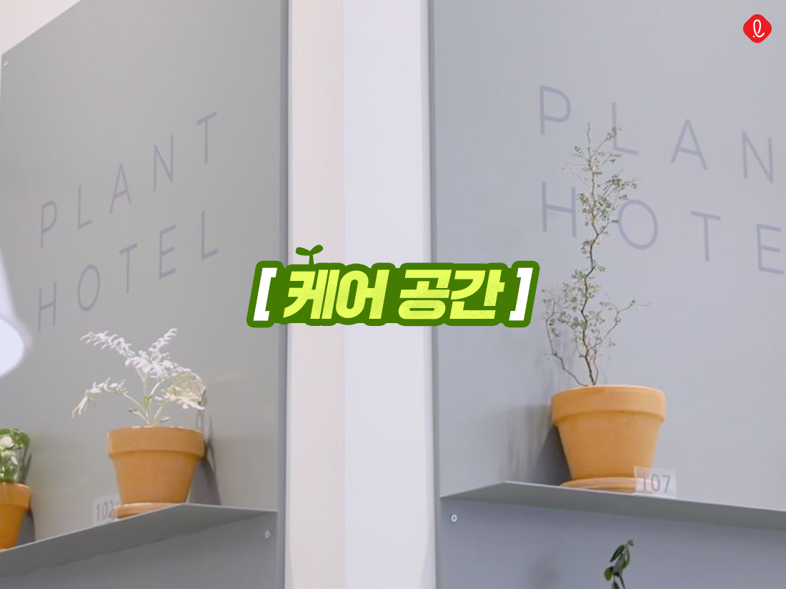 실라파티오 롯데백화점 미아점 반려식물 공기정화 식물 추천 미세먼지 플랜테리어 카페