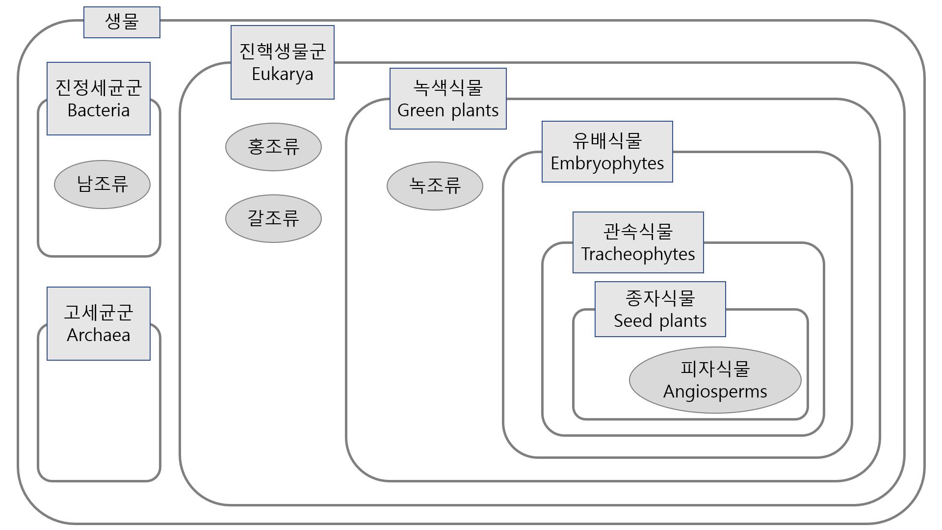 식물의 계통